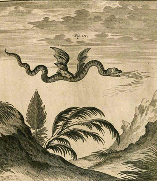 Représentation du dragon par Scheuchzer (1708)