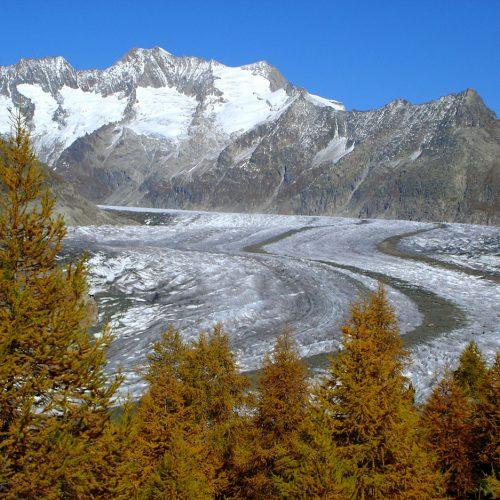 Le glacier et la forêt d'Aletsch en 2005 © S Coutterand