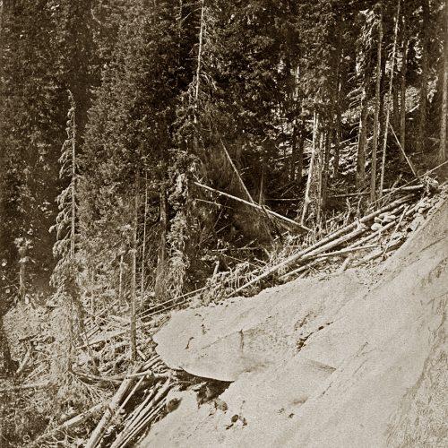 Photo Dollfus-Ausset, le glacier d'Aletsch s'avance dans la forêt, © JHV